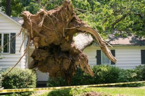 tree damage lawyers